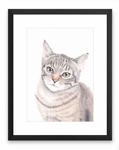 Cat Portrait in Coloured Pencil
