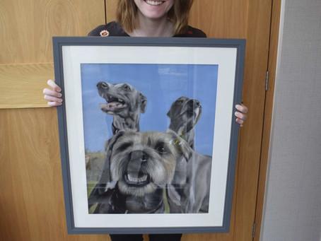 Multiple Pet Portrait - A portrait of 2 whippets and a border terrier