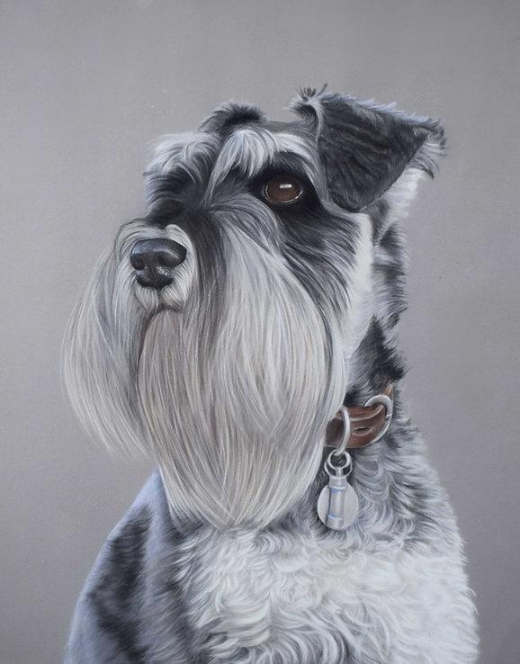 Monty dog pastel portrait miniature schnauxer.jpg