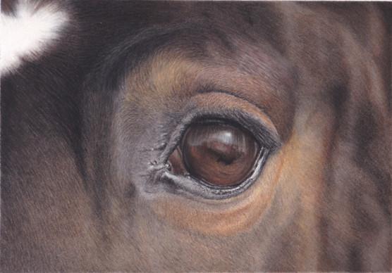 Horse Eye Study in Pastel Pencil by Amy Elizabeth Fine Art