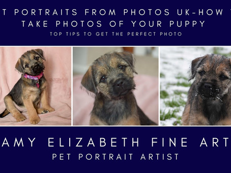 Pet Portraits From Photos UK-How to Take Photos of Your Puppy (for a puppy pet portrait)