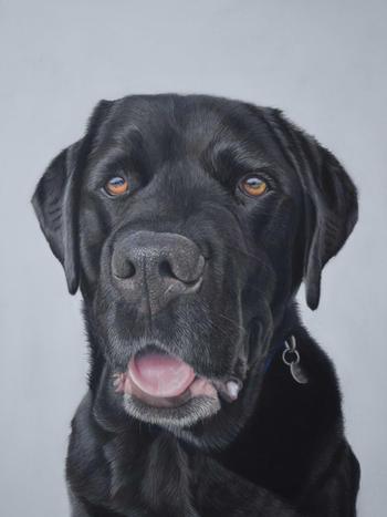 black labrador pastel pet portrait
