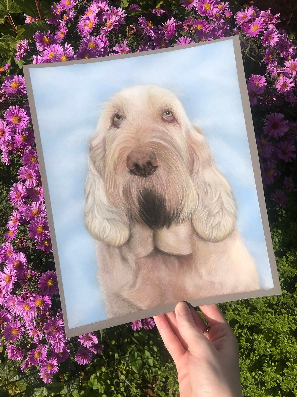 italian spinone portraits in pastels