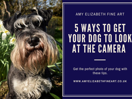 Pet Photography Tips- 5 Ways to Get Your Dog to Look at the Camera