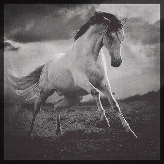 Wild-Horse_Fotor.jpg