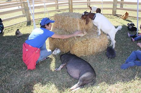Farm Animals for Birthday Party