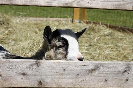 Farm Animals to You