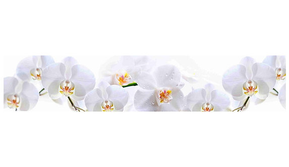 Кухонный фартук-002 Белые орхидеи