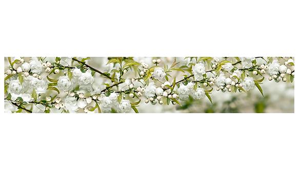 Кухонный фартук-042-6  Цветущая яблоня