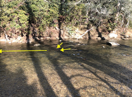 Reading Water:  Find out How to Find Trout!