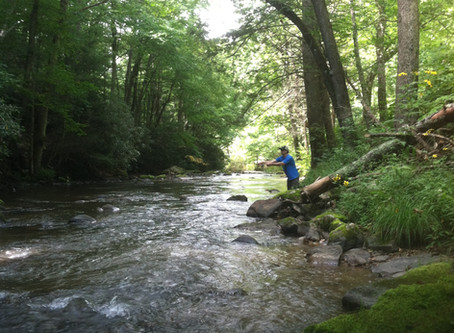 Summer Trout Fishing in WNC