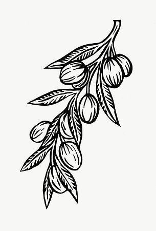 olive_branch3.jpg