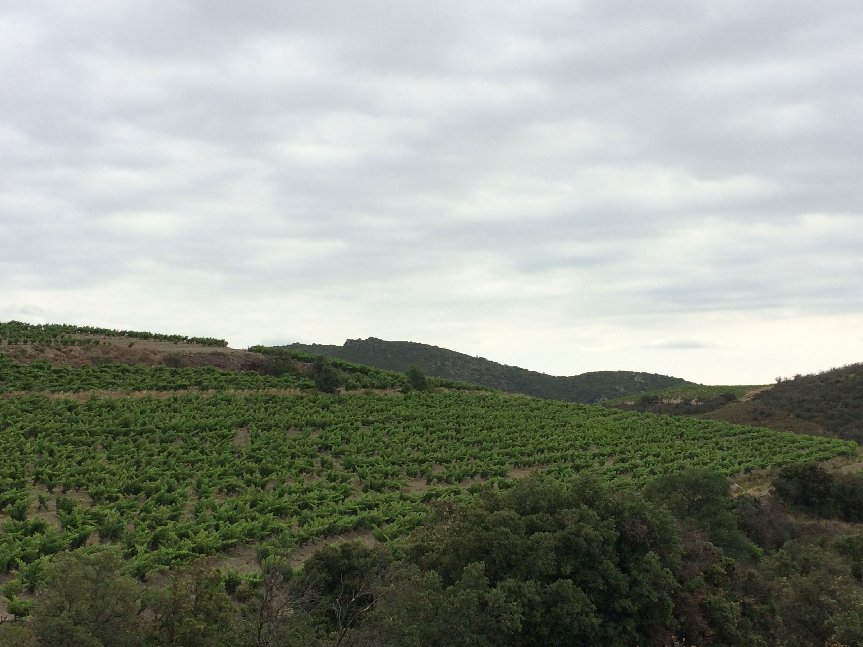 Syrah & Vieux Carignan - Terroir de Rasiguères