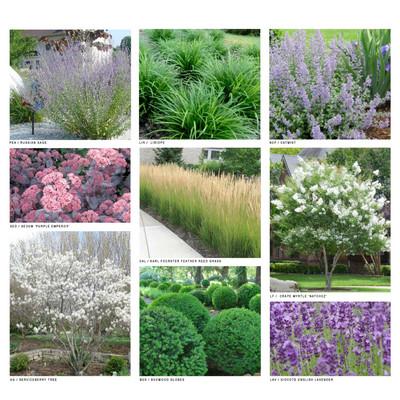 Hamptons Garden Plant Palette