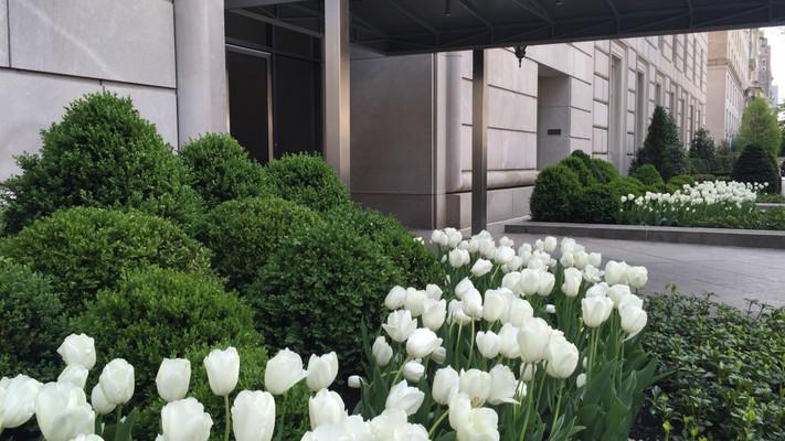 5th Avenue Entry Garden