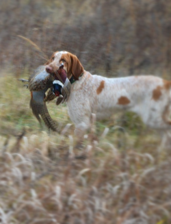 Lucy Hunting