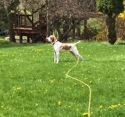 Handsome pants playing in the yard ❤️