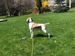 Playing in the yard ❤️