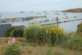 Port_StGildas_Houat