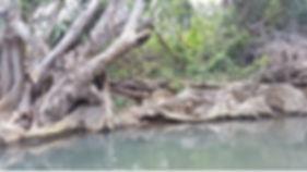 La Dominique - Croisière à la voile