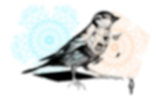 illustration_1_'Birds-of-a-Feather'1.png