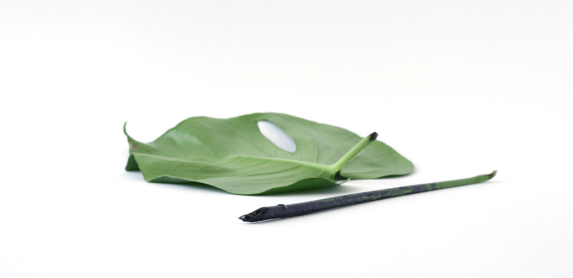 plant stem.jpg