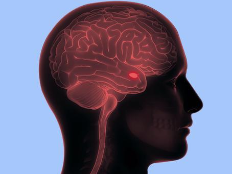 Amigdala, nöroterapi ve Westworld*: Beyne korkusuz olmayı öğretmek mümkün mü?