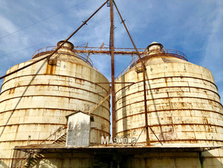 Magnolia Market and Beyond!