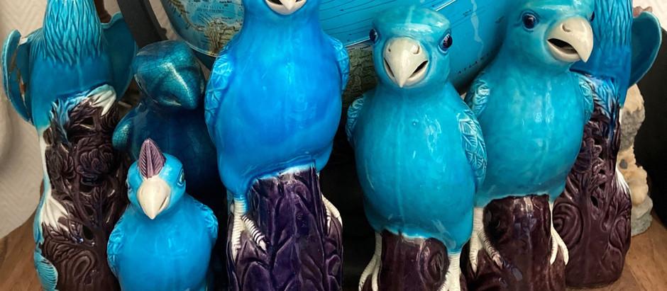 Magnifiques perroquets