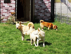 わんにゃんランドに保護された野犬たち