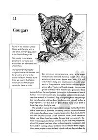 wild-neighbors-cougar.jpg