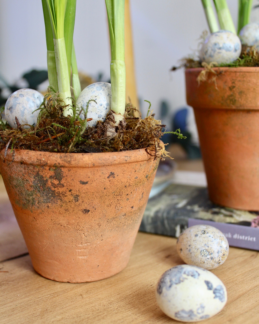 Vintage terracotta pots with spring bulbs and speckled eggs