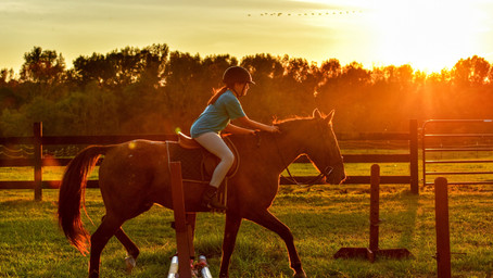 The Bombproof Horse