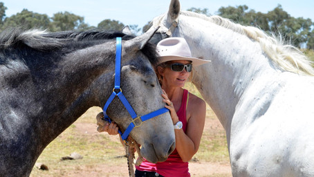 Achieving a Meaningful Connection with Horses