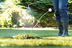Calgary-Lawn-Fertilization.jpg