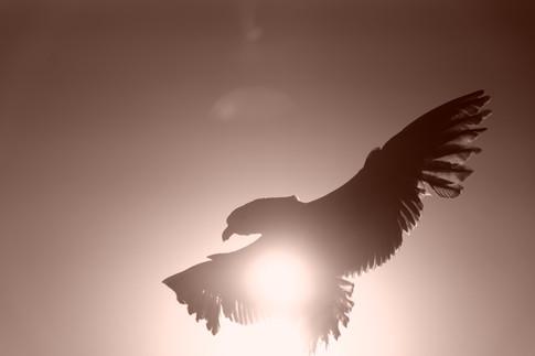 Ritual de plumas