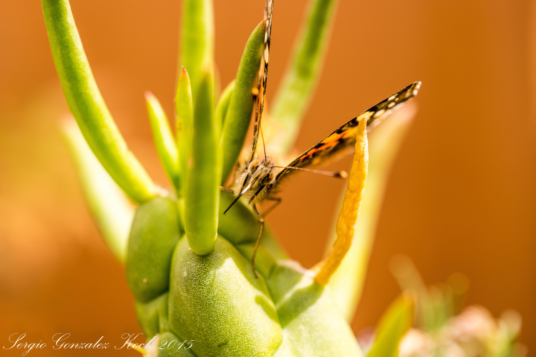 mariposa1_21715587635_o