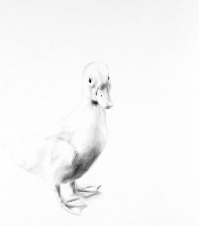 'Quack'