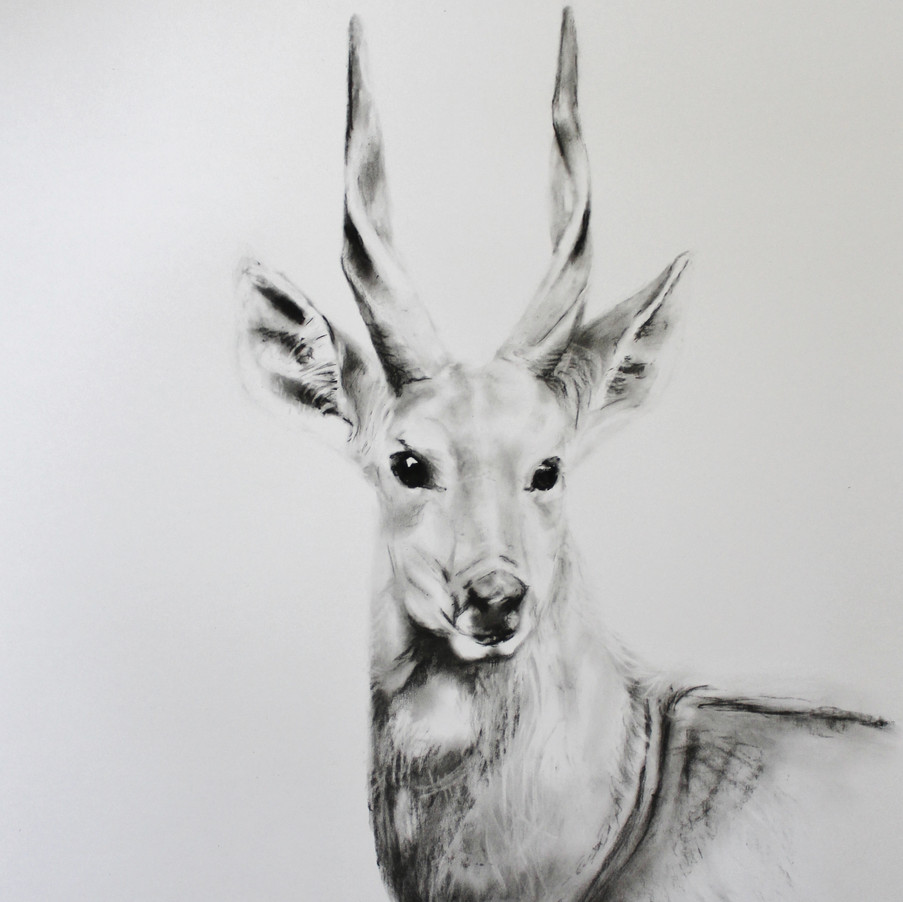 'Bushbuck'
