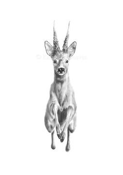 'Murder Buck'