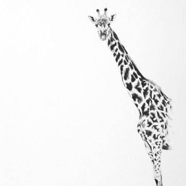 'Giraffe' SOLD