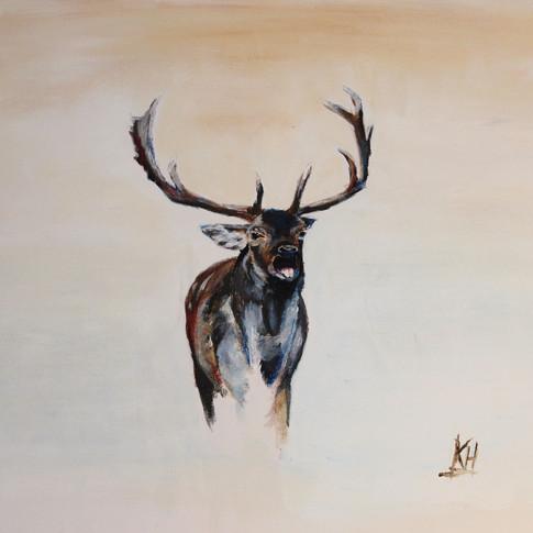 Fallow Buck
