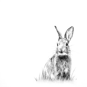 'Rabbit'