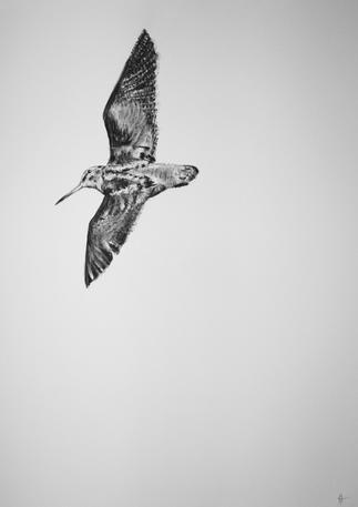 'Flight of the Woodcock'