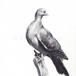 'Pigeon'