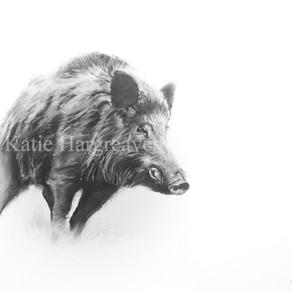 'Wild Boar'