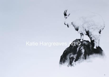 'Mountain Goat'