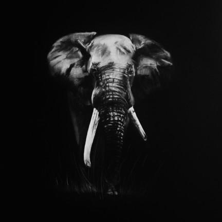 'Elephant'