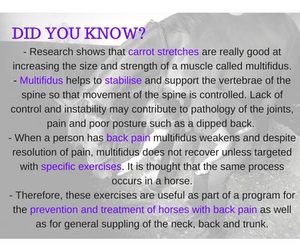 Carrot stretches, baited stretches or dynamic mobilisation exercises for multifidus