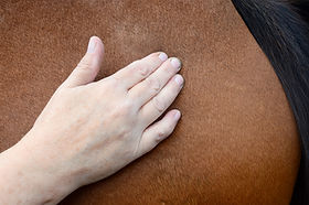 Equine physiotherapy, rehabilitation